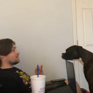 お家で仕事をしようとした飼い主さんに、ワンコはとってもお怒りのようです