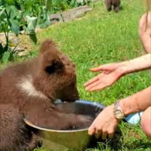 飲み水に豪快に頭を突っ込んじゃう!そんなヤンチャな子グマがかわいすぎる!