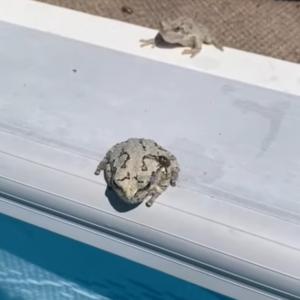 「うっとおしい!」体にまとわりつく虫をカエルが一閃!プールにはたき落とす!!
