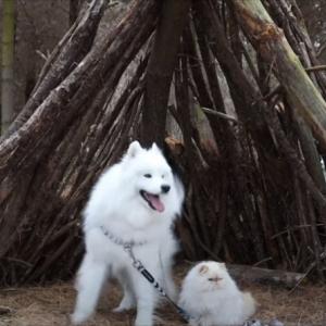 笑顔のワンコと不機嫌そうな顔つきのニャンコ。『白い毛並みの兄弟』の日常にほっこり