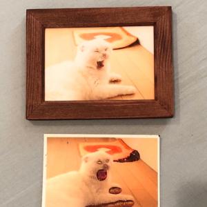 かわいいニャンコの写真になるはずが・・・写真用紙の裏表を逆に印刷してしまった結果が無残すぎる!!
