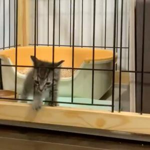 「やはり猫は液体」「子猫飼育あるある」ケージからニュルリと流出する猫の動画がかわいすぎると話題に