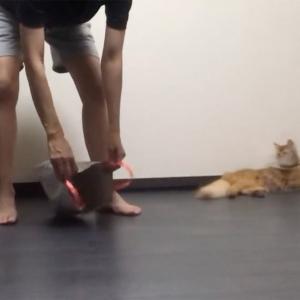 興奮して走り回る猫を手っ取り早くケージに戻す方法がすごい!「これは天才」「ドラゴンボールの電子ジャー」