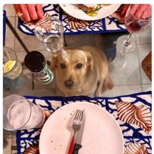 犬を飼ってる人にはガラステーブルは不向き!? 「テーブルクロスの存在意義が初めて理解できた」「おとなしく座ってるのに目力だけはやたらと強い」
