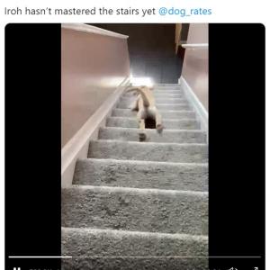 階段を滑り落ちていくワンコに注目集まる 「これが階段の正しい下り方」「ケガしなければいいんだけど」