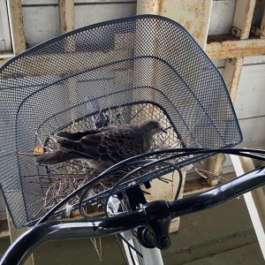 嘘でしょ? 久々に自転車通勤しようと思ったらカゴが大変なことになっていた写真が注目を集める
