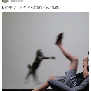 飼い主さんのデザートを狙う猫の写真が話題「ちっちゃな怪獣ですね」「鳥獣戯画のよう」