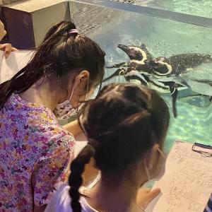 すみだ水族館「夏の自由研究 超サポート制度」が神企画だった! ペンギンはお風呂に入る?何時に寝るの? 飼育員さんと一緒に観察