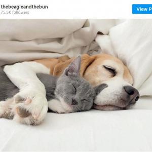 犬と猫なのに仲良すぎでしょ 「この可愛さは反則」「癒されます」