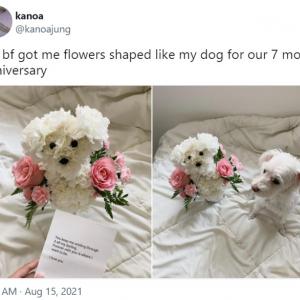 彼氏からのプレゼントは愛犬そっくりの花束 「記憶に残る日になるね」「このボーイフレンドは大切にしたほうがいいわよ」