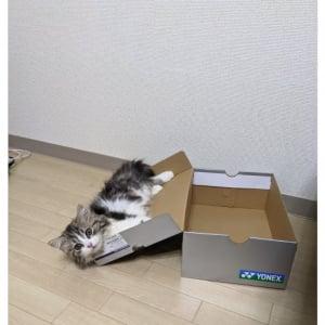 """「えっ…そっち?」 にゃんこに""""箱""""を与えてみたら…… 意外な行動がTwitterで話題に"""