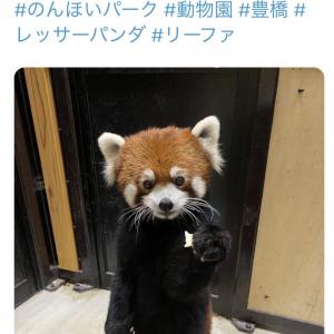 レッサーパンダの立ち姿がネットで反響「背中を確認させて下さい。ファスナーがあるはず」「きぐるみ?」