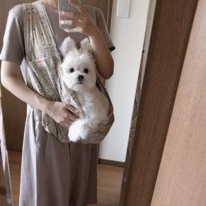 鏡を見てウサギになった犬「絵に描いたような驚愕っぷりで笑いました」
