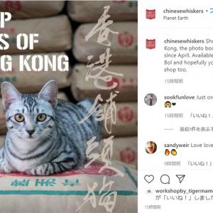 """香港の""""看板猫"""" たち「香港に住んでいた時のことを思い出すよ」「ちゃんと店番してる猫もいるし」"""