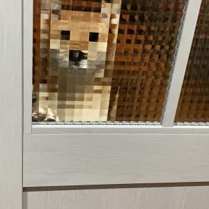 柴犬がお出迎えした結果→「レゴ柴犬のようです」「マイクラ犬」