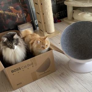 """「違う、そうじゃない」猫用ベッドを買ったのに段ボールでくつろぐ猫様が""""猫あるある""""すぎて話題に"""