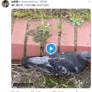 山寺宏一さん「鳩に鳩のモノマネで話しかけてみた」動画をツイートし大反響 超絶クオリティの「鳩マネ」に驚きと称賛の声