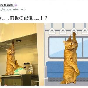 前世はサラリーマン!?  松丸亮吾の愛猫写真にファン大爆笑「可愛い」「お疲れ様です」