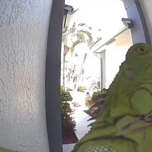 玄関のカメラの前に姿を現した緑色のお客さん。家主が思わず飛び上がって叫んだその相手とは・・・