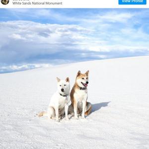 アメリカの名所で撮影した柴犬たちの写真をInstagramで公開するフォトグラファー 「モデルさん完璧ですね」「ハスキーかと思ったら柴犬なのね」