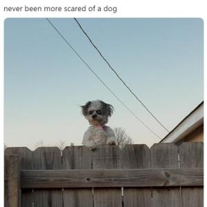 フェンス超しにこちらを覗く犬の写真が話題 「こんなに恐ろしい犬は初めて」「目を合わせちゃダメだ」