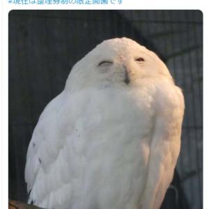 シロフクロウの笑顔がネットで反響 「ハリポタに出ていたのと似てます」「ヘドウィグ思い出した」