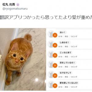 「思ってたより愛が重めだった」猫語翻訳アプリを使った松丸亮吾の投稿に14万超いいね