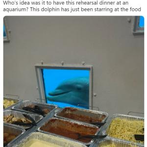 水族館でのリハーサルディナーが気になって仕方ないイルカ 「他人が食べてるものが気になります」「少しはお裾分けしてあげようよ」