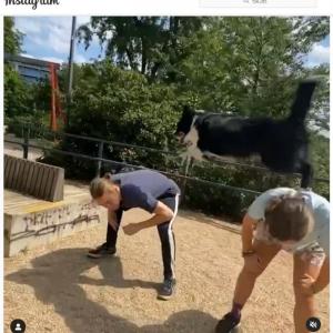 """パルクールのような動きをする""""忍者犬"""" 「犬とは思えない」「ものすごい運動能力だ」"""