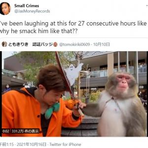海外にも笑いを振りまく日光さる軍団 「これは延々観てられるやつ」「殴った後の猿の表情を見てよ」