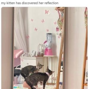 鏡に映った自分の姿をみつめる子猫が話題に 「2秒後に鏡を引っ搔きそう」「初めての自己認識」