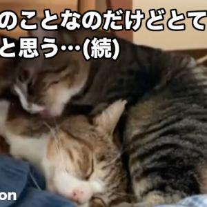 【ほっこり】病気を抱えた家族労わる「優しい猫ちゃん」にTwitter3万いいね