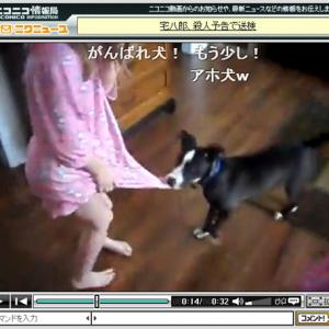 幼女を犬から救う猫の動画「ご主人様に何をするニャ~!」