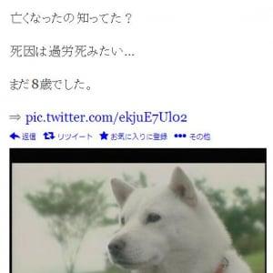 """""""ソフトバンク犬""""として有名なカイ君が死亡と『Twitter』で拡散される もちろんデマ"""