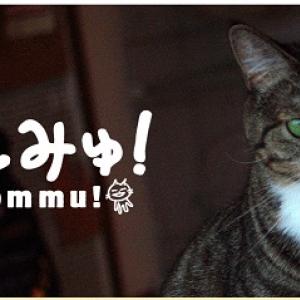 猫好きさんへ一週間の疲れを癒す生中継! 猫専門チャンネル「ねこみゅ!」を今すぐチェック!