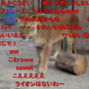 ライオン放し飼いの自己責任動物園! こまけぇこたぁいいんだよ!!