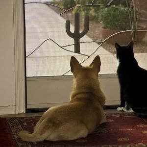 ペットの飼育費用、犬は年間33万円で猫は17万円