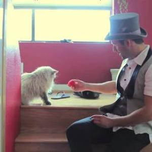 猫に手品を見せたらどんな反応をする? そんな動画が話題