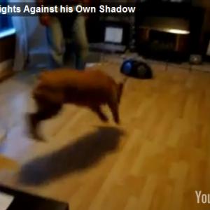 自分の影と戦うバカ犬の動画が面白すぎる!
