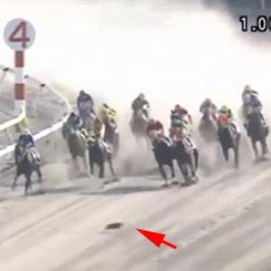 大井競馬場のレース中に馬の前を猫が横切る珍事