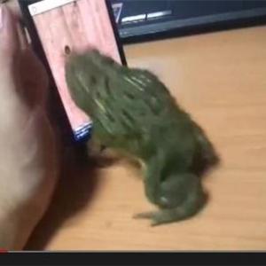【動画】ペットのカエルにゲーム画面の虫を見せてみたら……