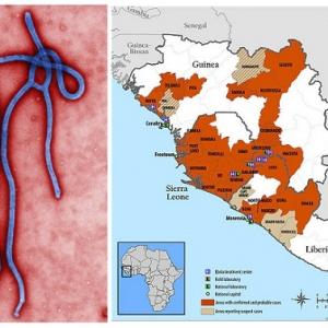 エボラ出血熱、緊急事態宣言!エマージングウイルスと動物の親密な関係