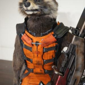 """モフモフで喋る! 宇宙一凶暴なアライグマ""""ロケット""""にインタビュー「お前ら一人残らずぶっ飛ばす!」"""