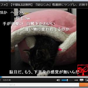 睡魔と戦いマカロンベッドから出ようとする仔猫の動画が可愛すぎる