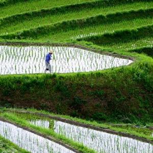 「ふるさと弁当」が農家を救う!? 岩盤規制打破の重要産業「農業」に未来はあるのか?