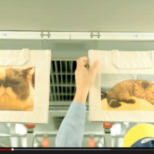 """もう発見した? """"ブサかわ猫""""の癒される写真が山手線をジャック 動画でも楽しめるニャー!"""