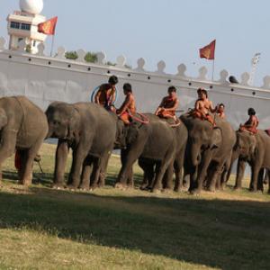 【タイレポート2014】タイ三大祭りの一つ「象祭り」