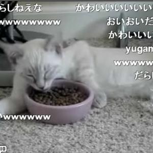 寝ながら食事するだらしない猫が話題に! 既に23万再生の大人気っぷり