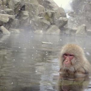 【JTB】いい湯だな! 日頃の疲れを吹き飛ばす人気温泉地10[流行サキドリ]