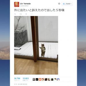 雪の日に猫ちゃんが「外に出たいと訴えたので出した5秒後」 画像つきツイートが話題に